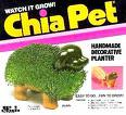 Chia Puppy